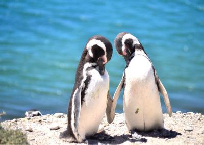 pinguini a puerto madryn